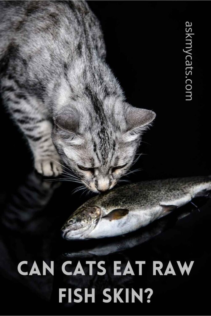 Can Cats Eat Raw Fish Skin