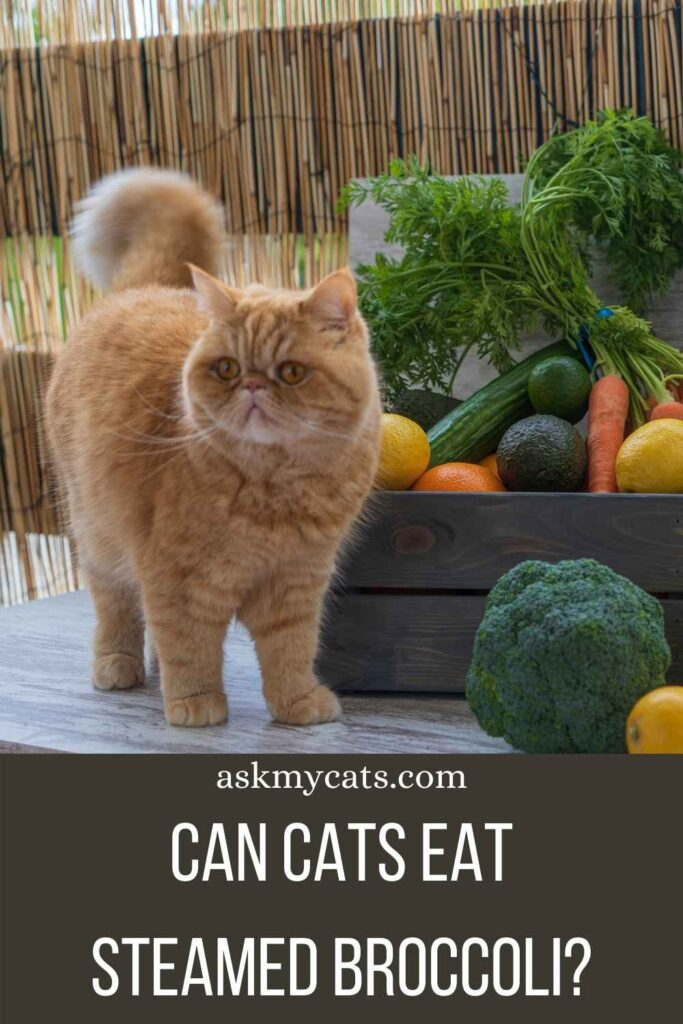 Can Cats Eat Steamed Broccoli?