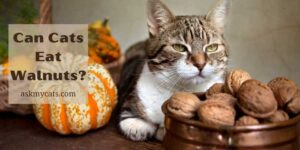 Can Cats Eat Walnuts? Know Before You Do Anything Wrong!