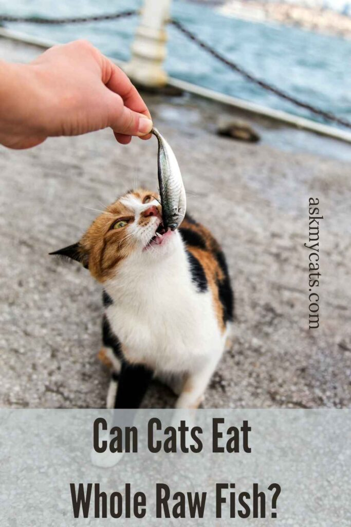 Can Cats Eat Whole Raw Fish