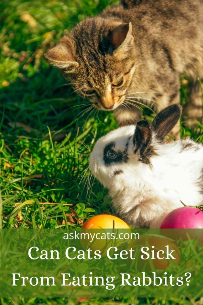 Can Cats Get Sick From Eating Rabbits?