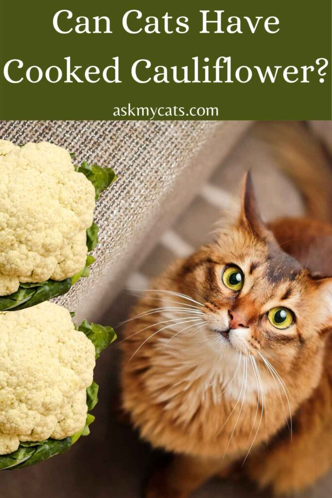 Can Cats Have Cooked Cauliflower?