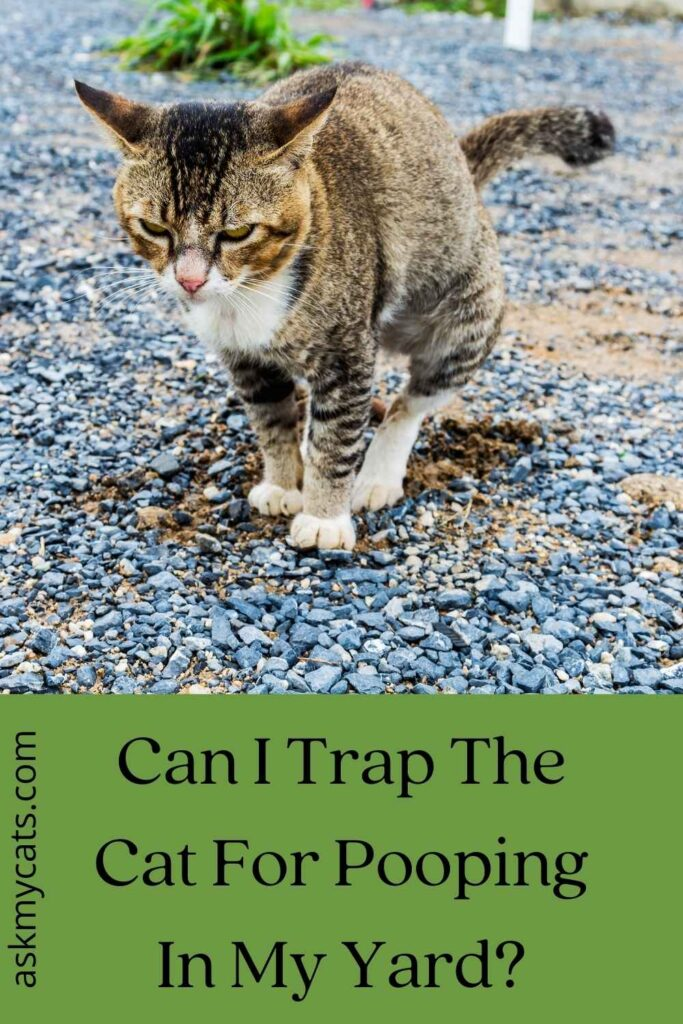 Can I Trap The Cat For Pooping In My Yard?