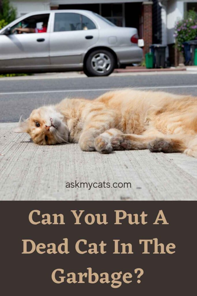 Can You Put A Dead Cat In The Garbage?