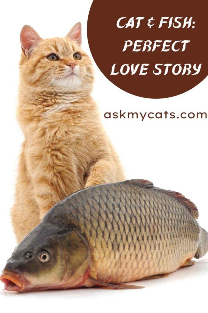 Cat & Fish_ Perfect Love Story