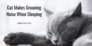 Cat Makes Groaning Noise When Sleeping? Is It A Thing To Worry?
