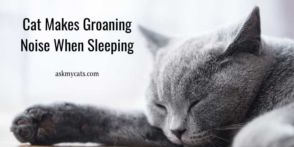 Cat Makes Groaning Noise When Sleeping