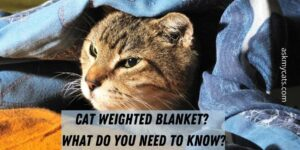 Cat Weighted Blanket? What Do You Need To Know?