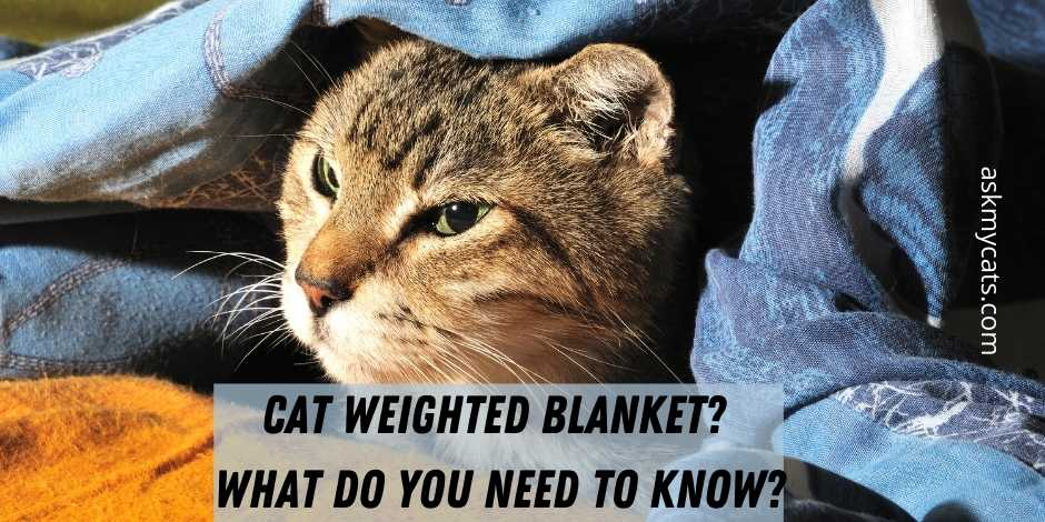 Cat Weighted Blanket