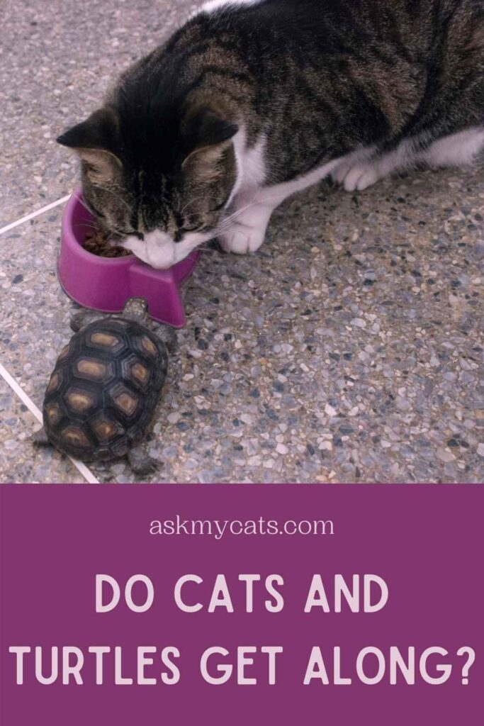 Do Cats And Turtles Get Along?