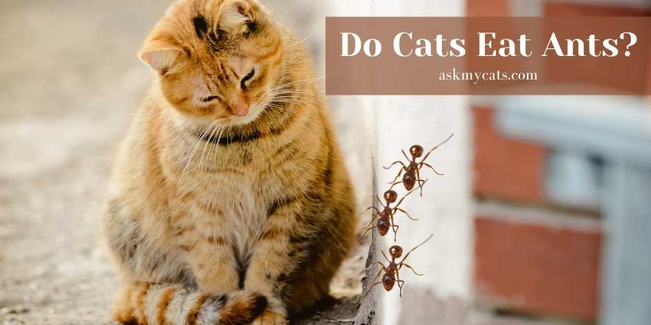 Do Cats Eat Ants