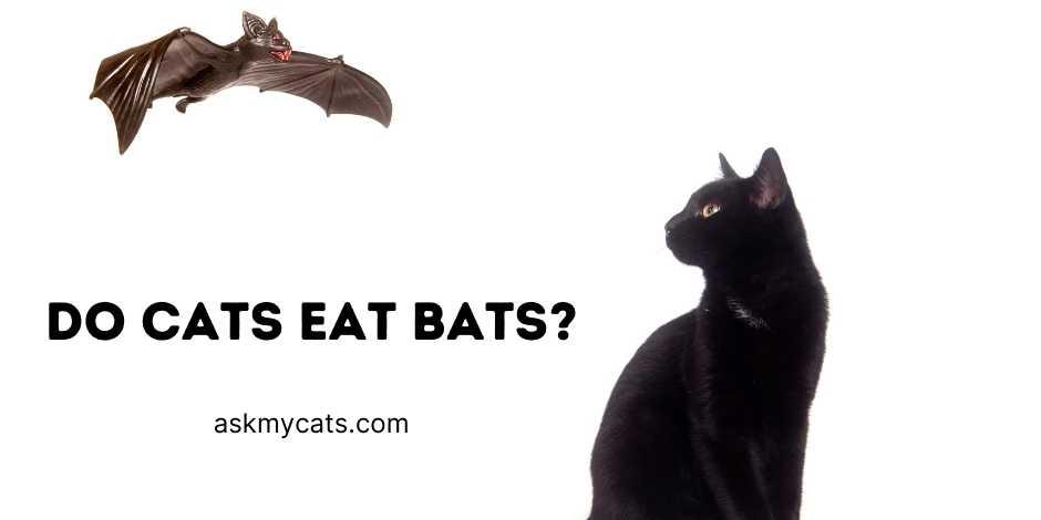 Do Cats Eat Bats
