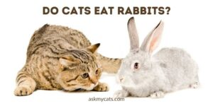Do Cats Eat Rabbits? What Makes Them Do So?