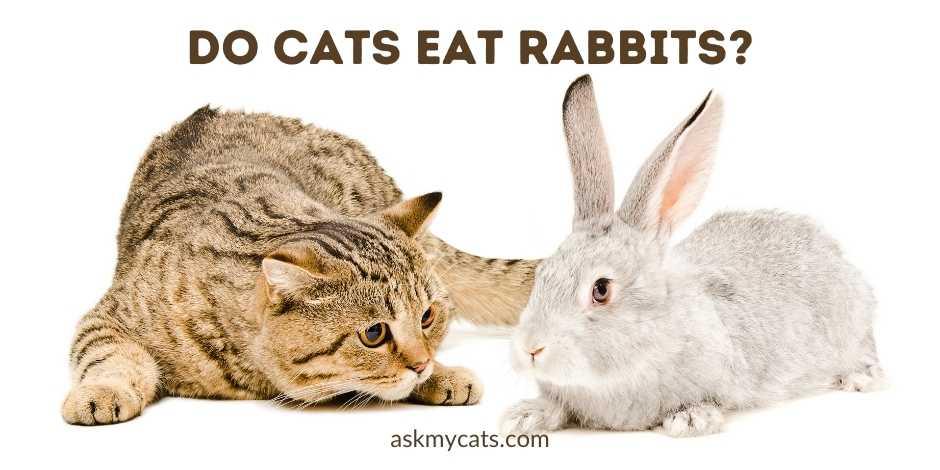 Do Cats Eat Rabbits