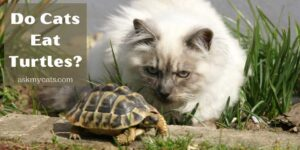 Do Cats Eat Turtles? Here's Answer To Your Questions!