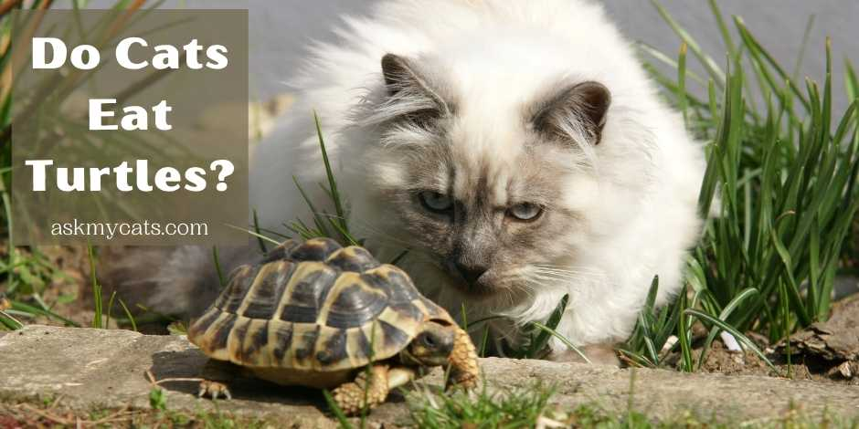 Do Cats Eat Turtles