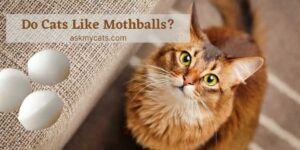Do Cats Like Mothballs? Go Through These Unexplored Facts!