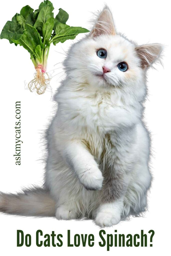 Do Cats Love Spinach?