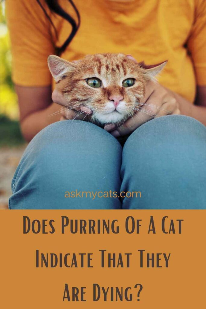 Does Purring Of A Cat Indicate That They Are Dying?