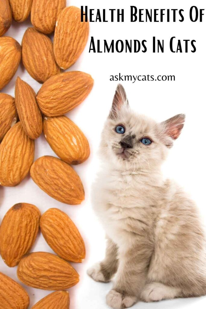 Health Benefits Of Almonds In Cats