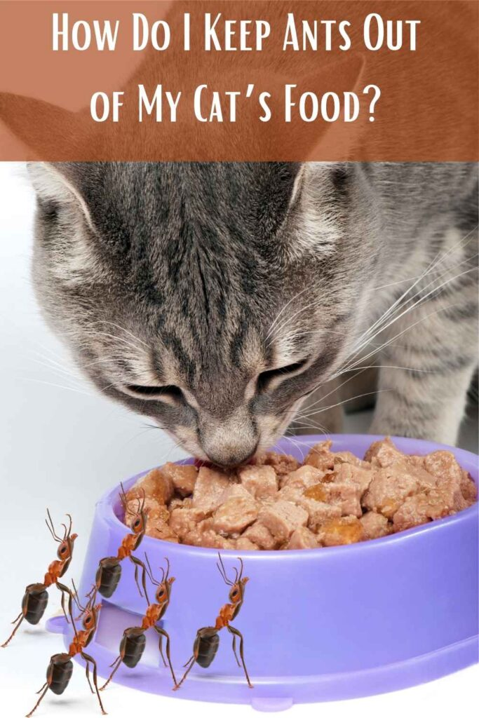 How Do I Keep Ants Out of My Cat's Food?