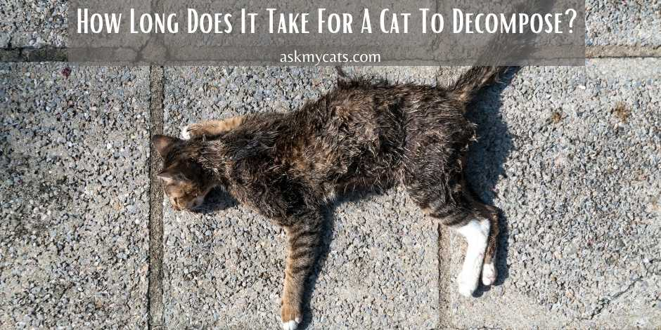 How Long Does It Take For A Cat To Decompose
