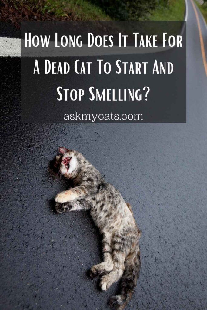 How Long Does It Take For A Dead Cat To Start And Stop Smelling?