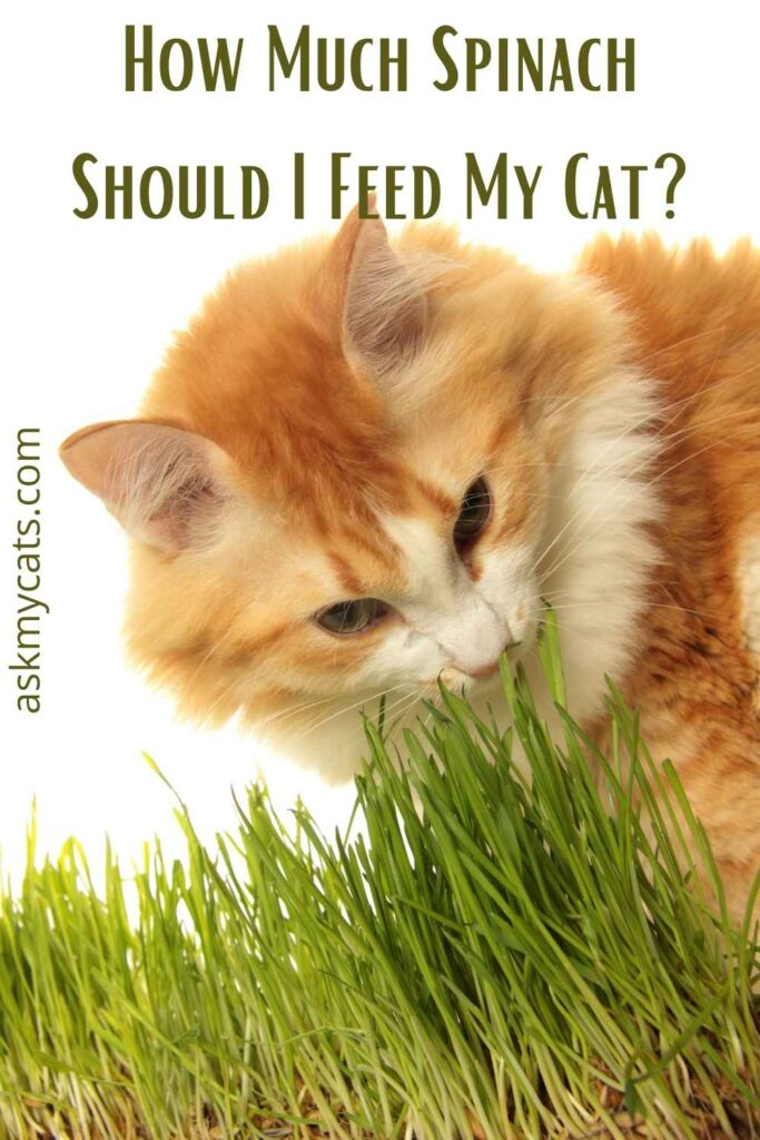 How Much Spinach Should I Feed My Cat?