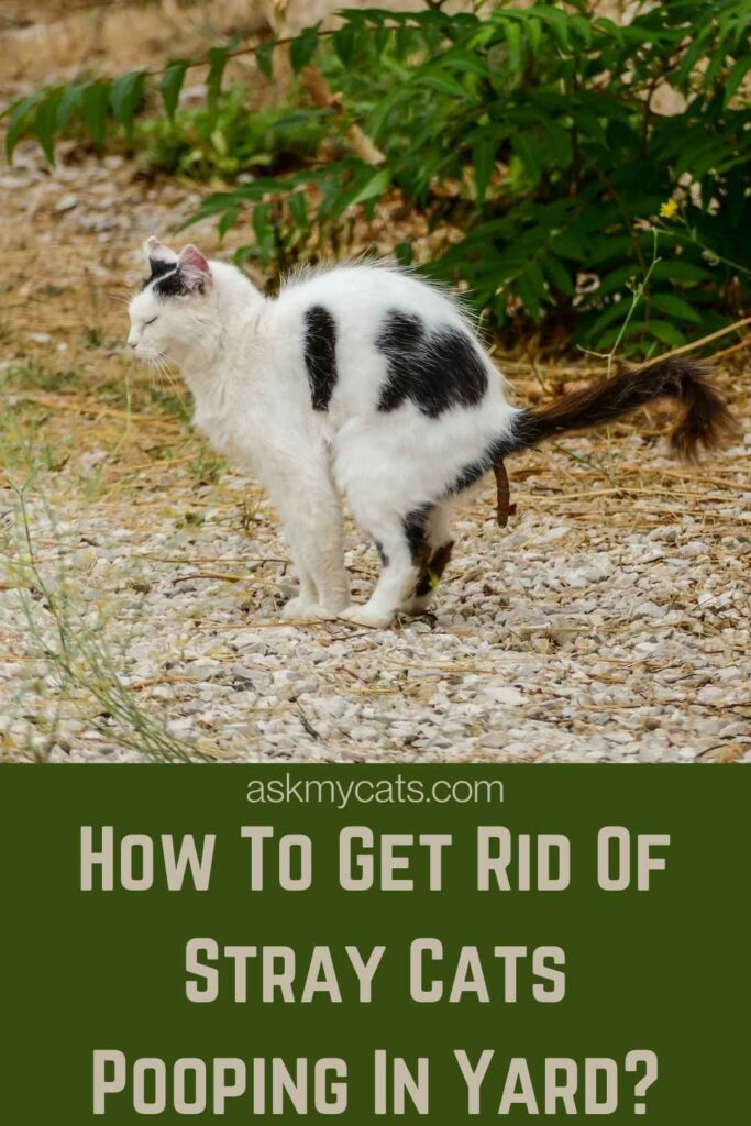How To Get Rid Of Stray Cats Pooping In Yard?