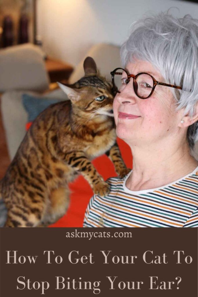 How To Get Your Cat To Stop Biting Your Ear?