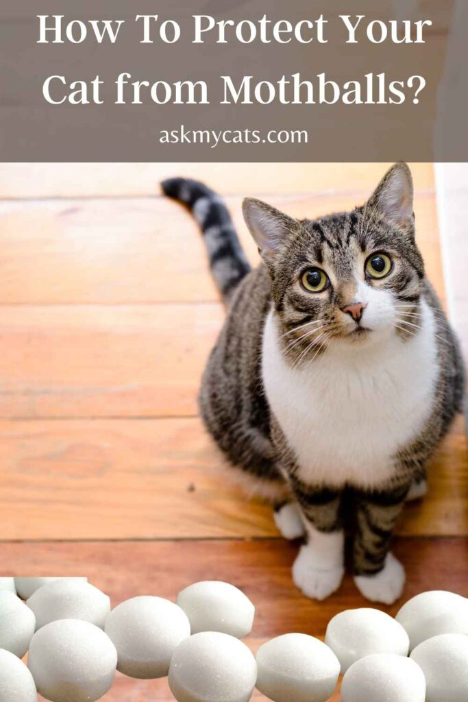 How To Protect Your Cat from Mothballs?