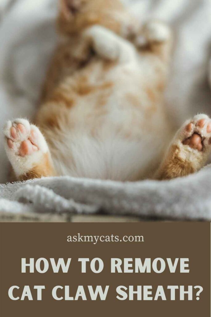 How To Remove Cat Claw Sheath?