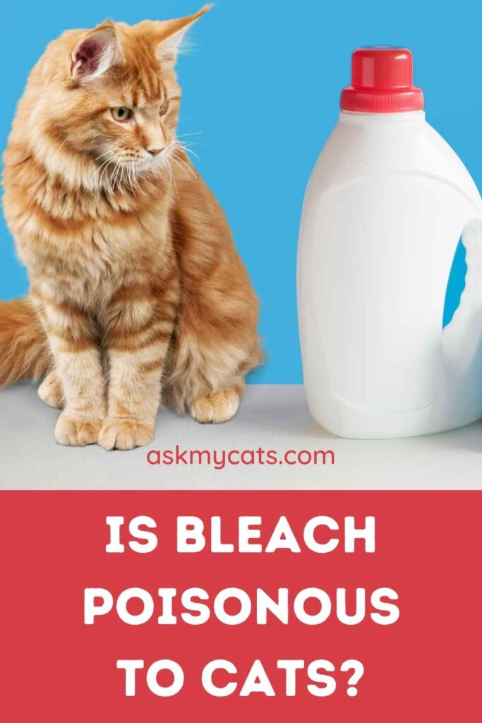 Is Bleach Poisonous to Cats?