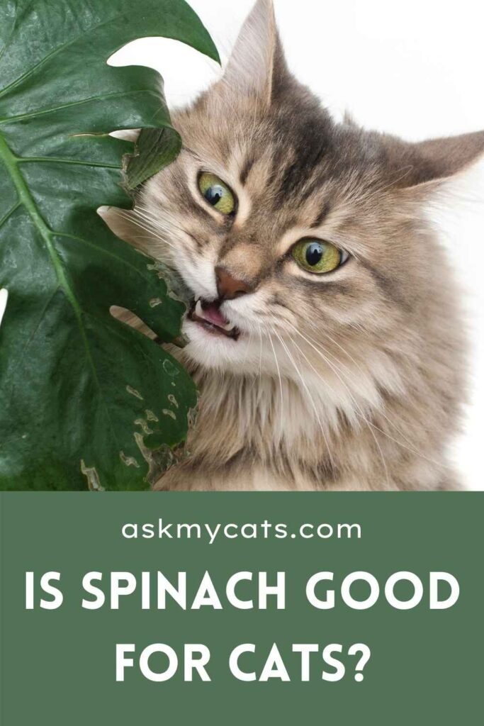 Is Spinach Good For Cats?