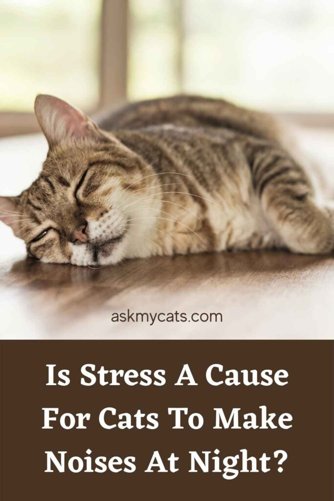 Is Stress A Cause For Cats To Make Noises At Night?