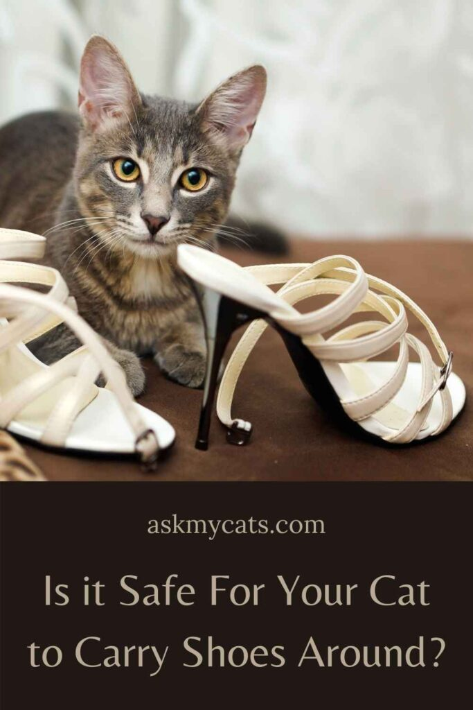 Is it Safe For Your Cat to Carry Shoes Around?