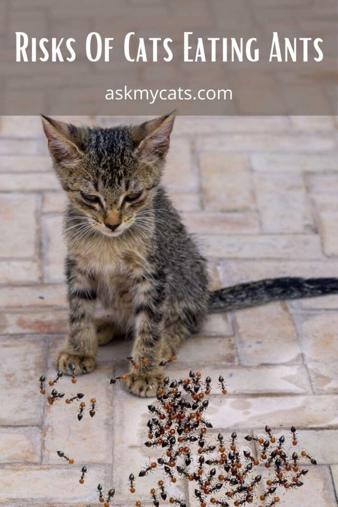 Risks Of Cats Eating Ants