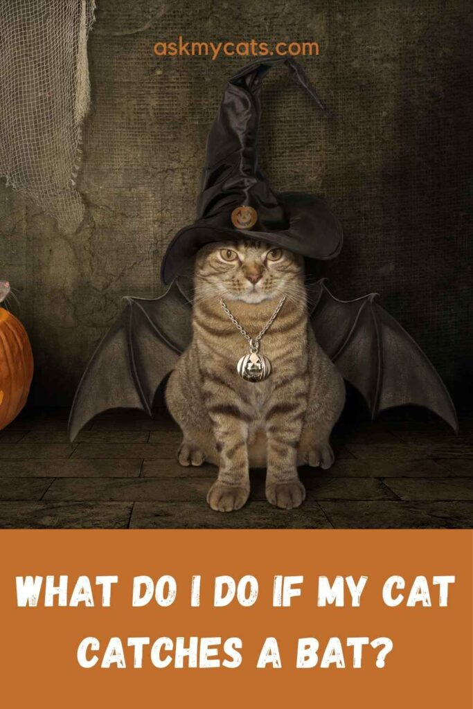 What Do I Do If My Cat Catches A Bat?