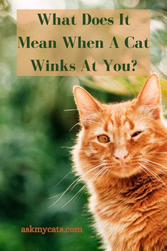 What Does It Mean When A Cat Winks At You?