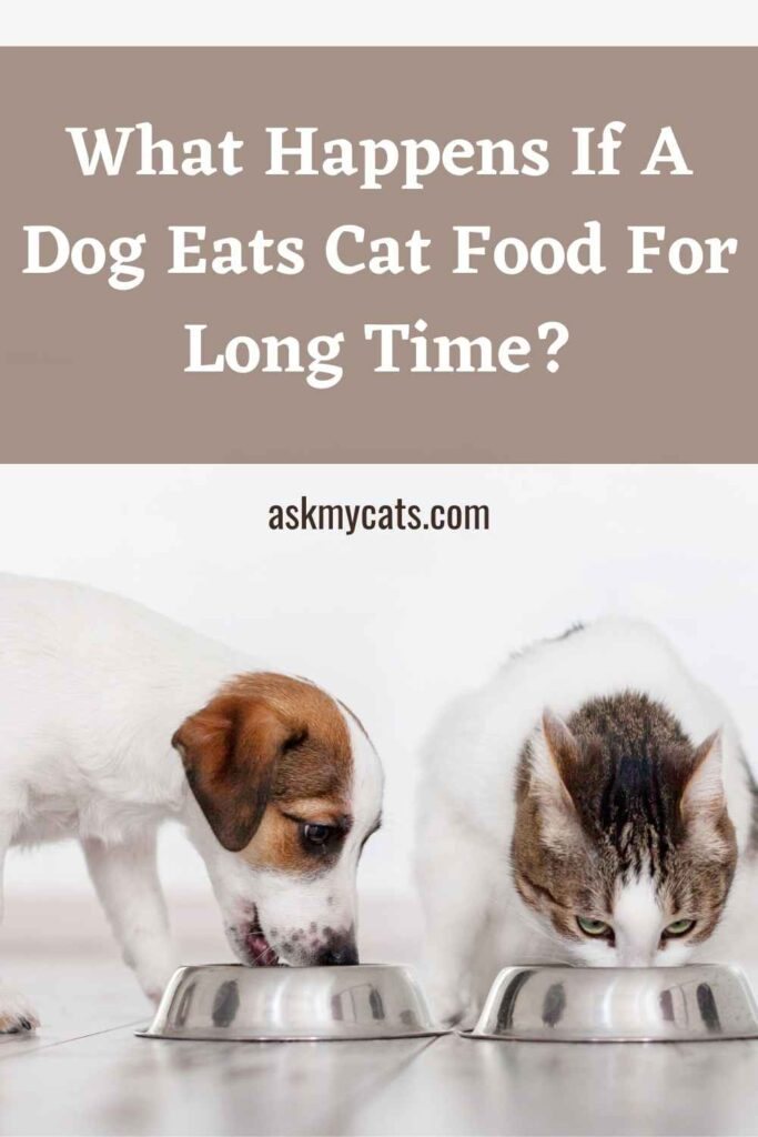 What Happens If A Dog Eats Cat Food For Long Time