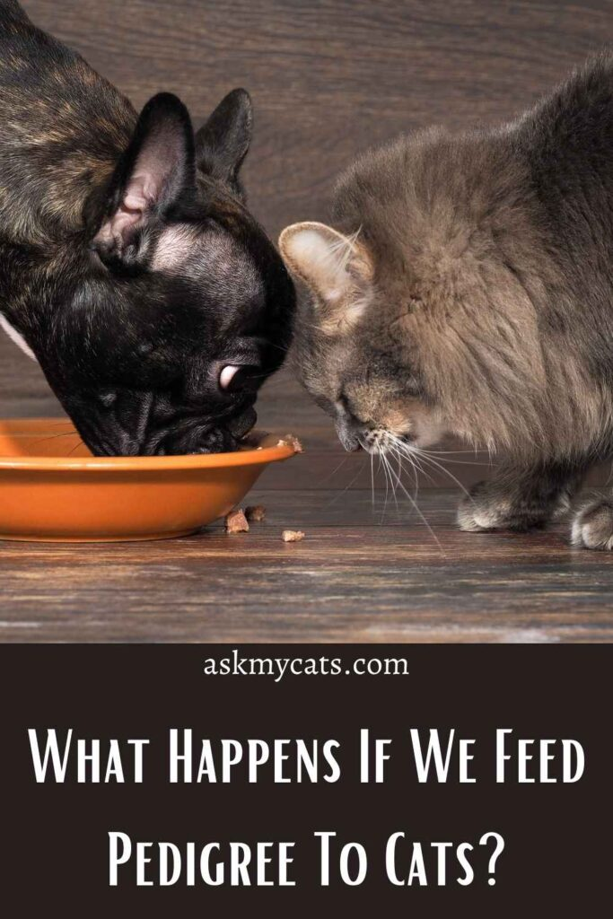 What Happens If We Feed Pedigree To Cats