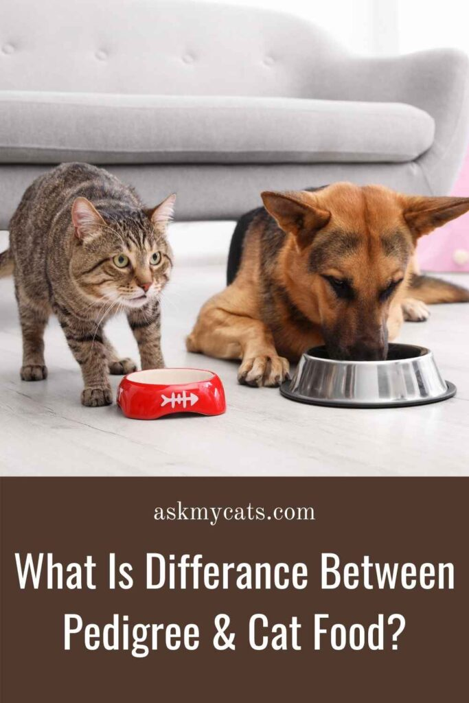 What Is Differance Between Pedigree & Cat Food
