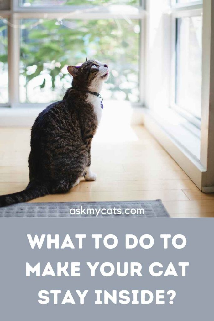 What To Do To Make Your Cat Stay Inside?