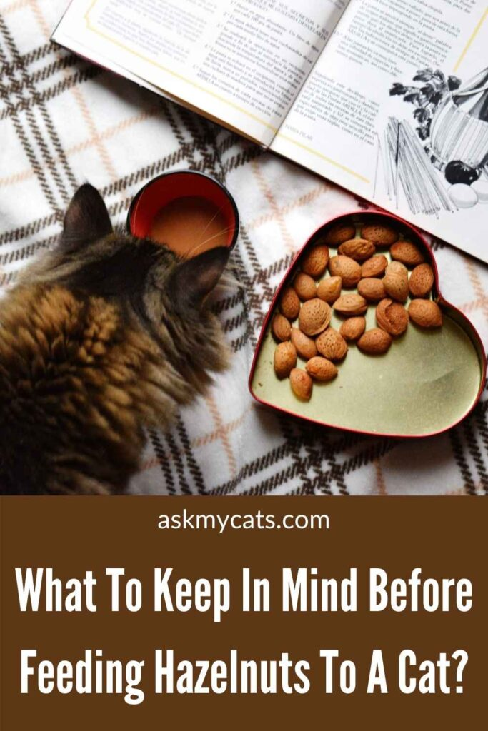 What To Keep In Mind Before Feeding Hazelnuts To A Cat?