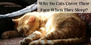 Why Do Cats Cover Their Face When They Sleep? Why Do They Do So?