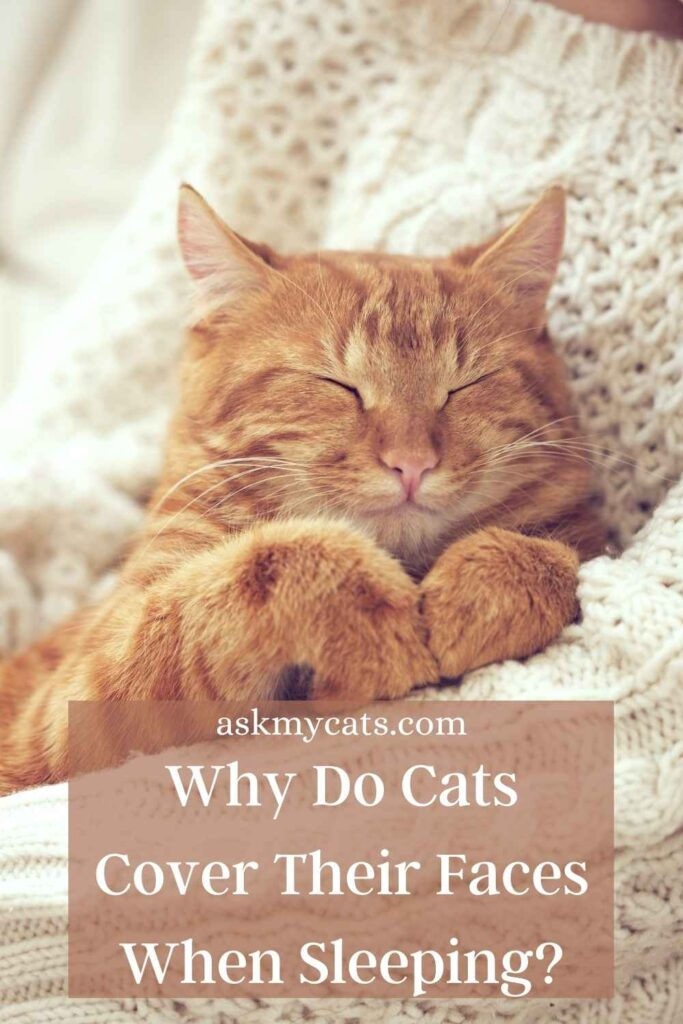 Why Do Cats Cover Their Faces When Sleeping?