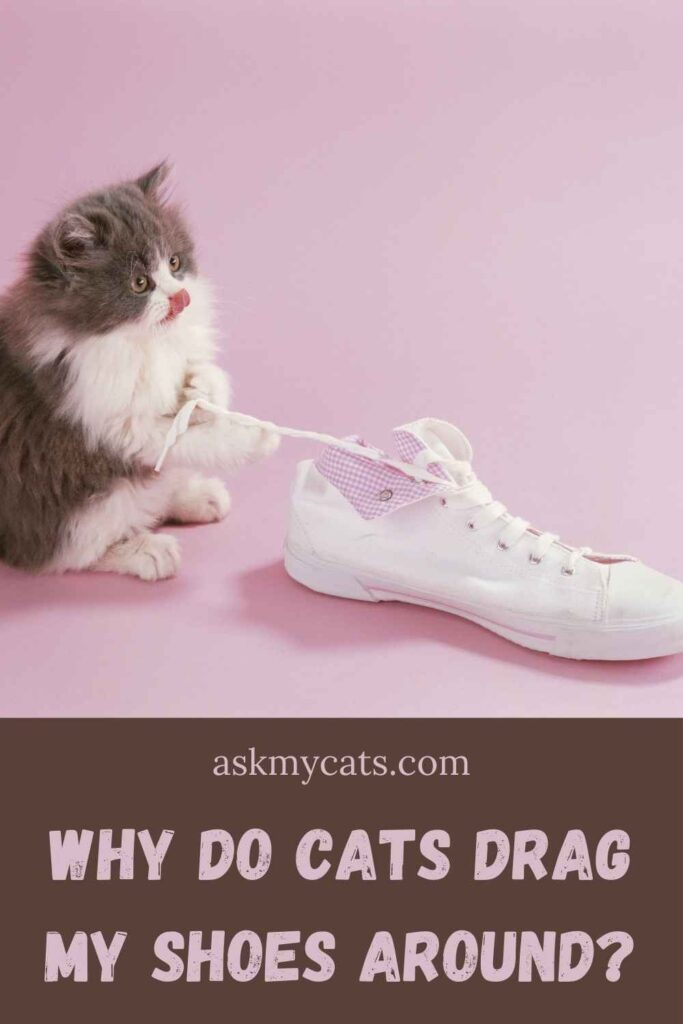 Why Do Cats Drag My Shoes Around?