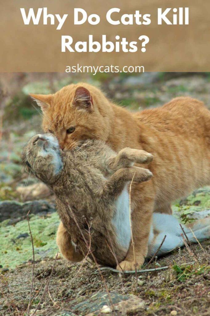 Why Do Cats Kill Rabbits?