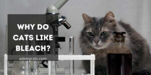 Why Do Cats Like Bleach? What Attracts Them?