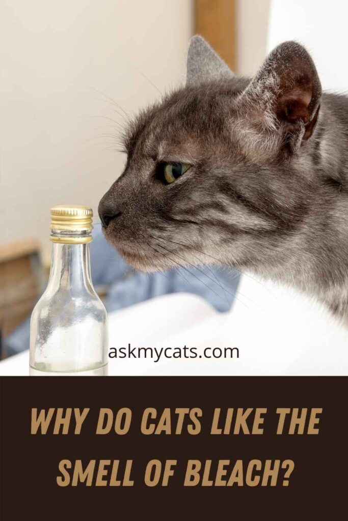 Why Do Cats Like The Smell of Bleach?